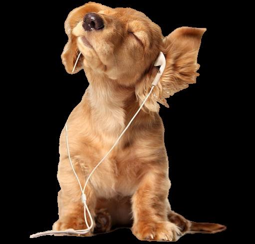 podcast-dog
